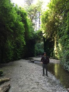 The entrance to Fern Canyon was like entering a peaceful, green sanctuary.