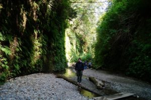 Mik Miazio, an arborist from Gig Harbor, WA, at the entrance to Fern Canyon. Mik joined the expedition at Redwoods River Resort
