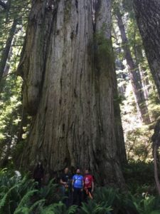 Sam, Andy, Damien and Bo, dwarfed by one of the trees in the Grove of Titans.