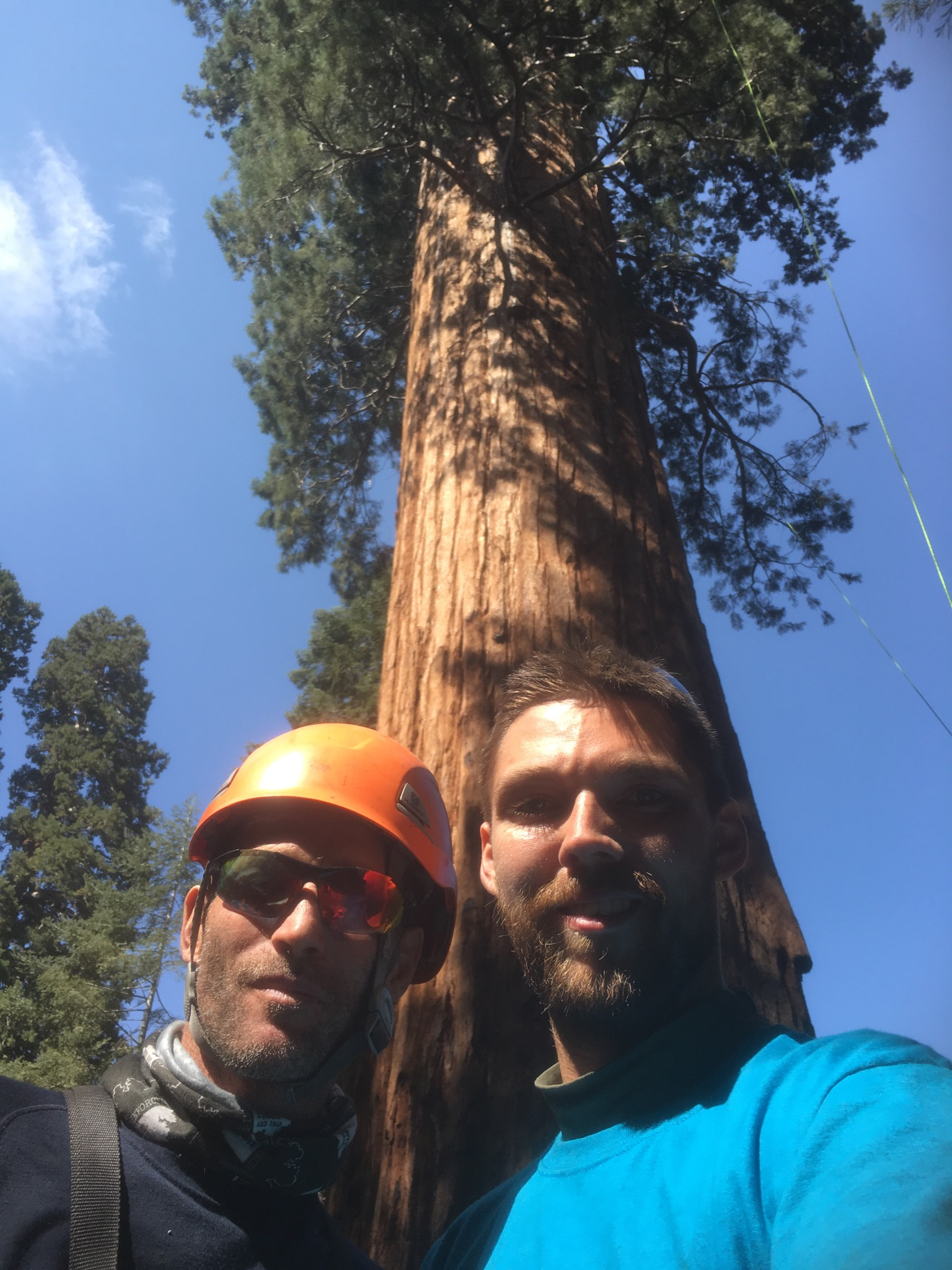 4. Team members Kev Bingham and Nick Markley scaled the massive sequoia behind them to collect both branch tip material and cones. These men knew they were risking their lives to perform these delicate operations at incredible heights. Every climber handled their duties like true champions.
