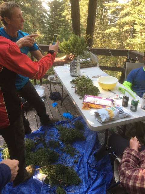 9. Back to our story about collecting branch tip material and collecting cones. Here we are back at camp. We are trimming and packaging the explant material that we collected from the tops of the trees earlier in the day.